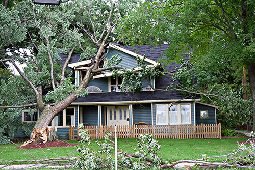 tree-fallen